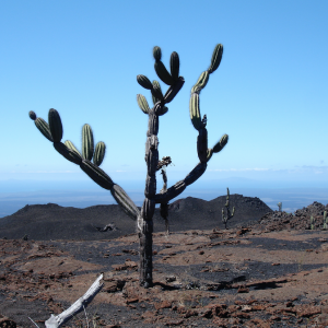 Galapagos Islands and Ecuador – A Multi activity Adventure