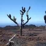 Galapagos Islands and Ecuador – A Multi activity Adventure