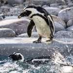 South Africa – Wildlife & Marine Luxury Adventure